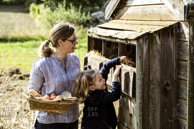 Woman and girl collecting eggs from a chicken house.