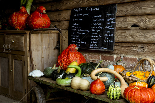 Selection of pumpkins and squash on wooden shelf in a farm shop.