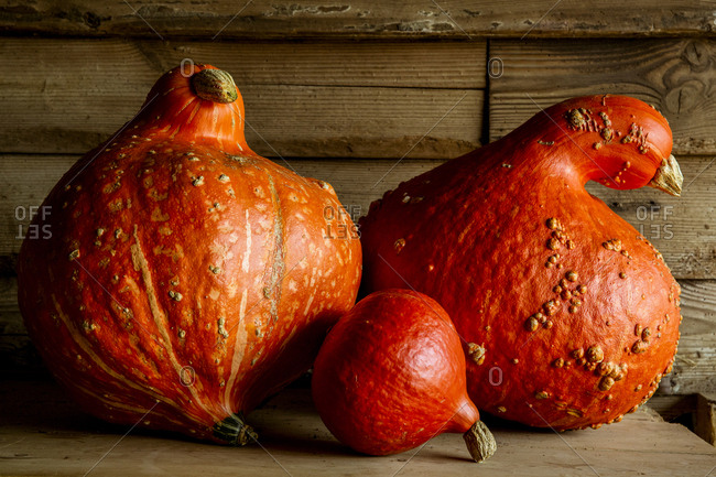 Close up of Red Kuri and two Orange Hubbard pumpkins on wooden shelf.