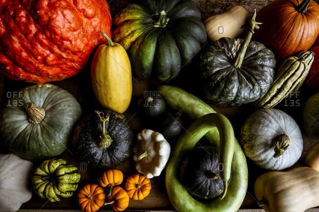 High angle close up of a selection of pumpkins and squash.