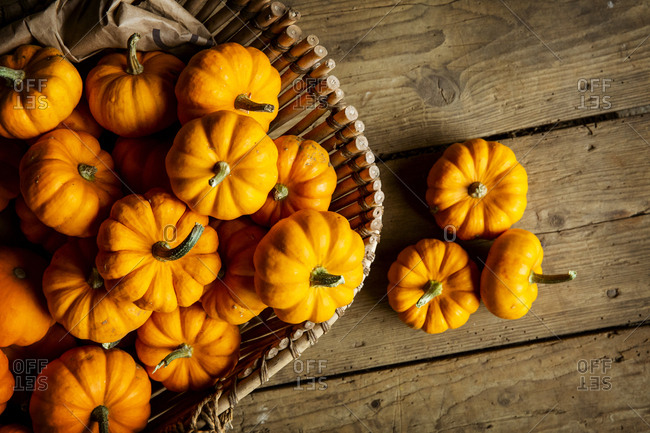 High angle close up of a selection of small bright orange pumpkins.