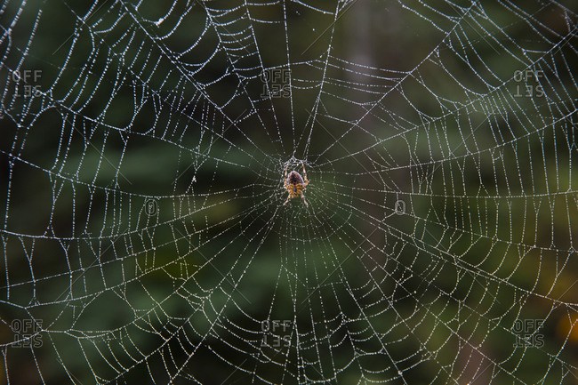 Close up of spider in a web.