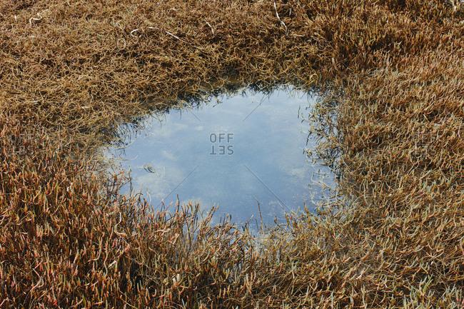 Small intertidal pool of standing water with marsh grasses, dusk, Drakes Estero, Pt. Reyes National Seashore, California, USA.
