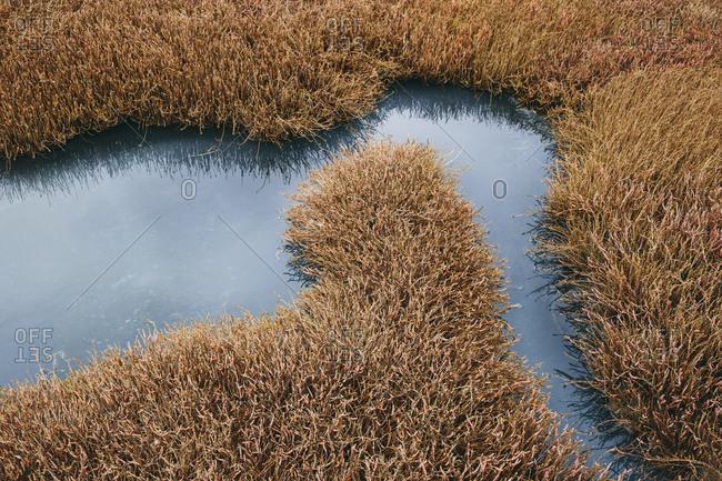 Intertidal pool of standing water with marsh grasses, dusk, Drakes Estero, Pt. Reyes National Seashore, California, USA.