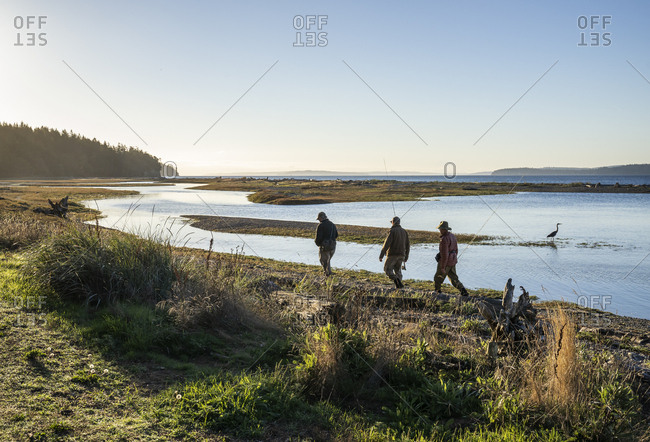 Two fly fisherman and a guide walk  past a great blue heron along a salt water beach estuary while fishing for searun coastal cutthroat trout and salmon at Indian Island in northwest Washington State, USA.
