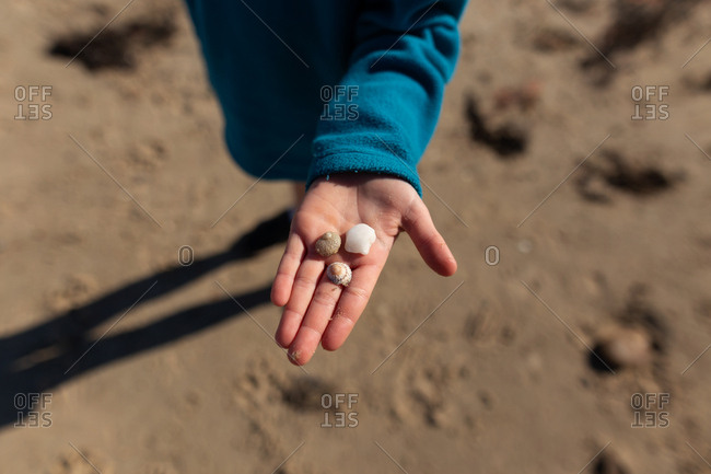 Boy holding shells on a beach