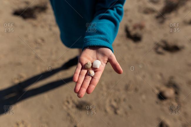 Boy holding shells on a beach