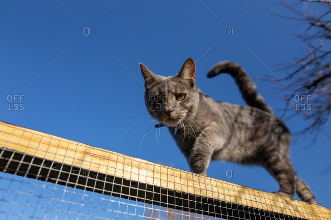 Low angle view of gray cat on chicken wire fence