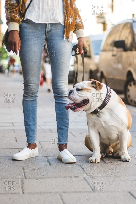 Low section of woman in jeans standing with English bulldog on sidewalk at city