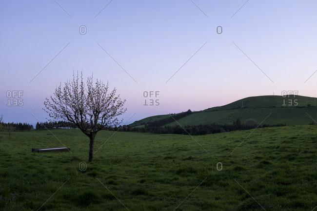 Lone tree in a meadow