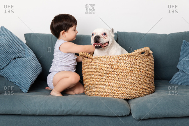Toddler playing with dog on a couch in a basket