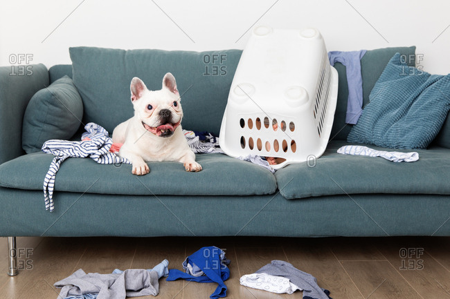 Toddler and dog playing on sofa with laundry baskets
