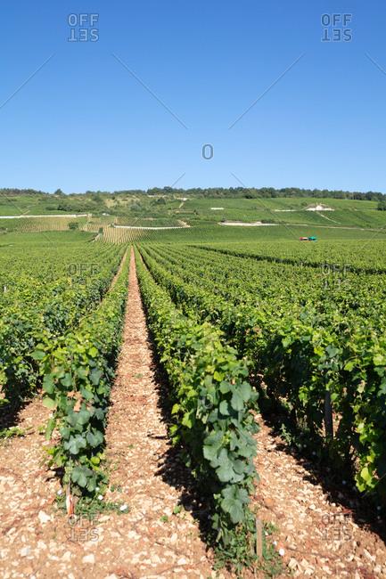 Burgundy, France - July 9, 2018: Romanee-Conti vineyard