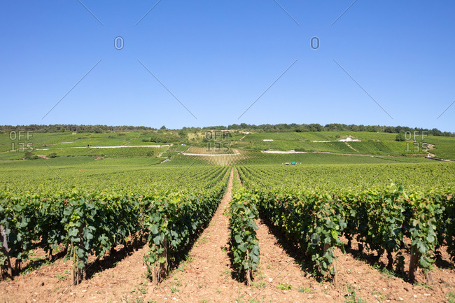 Burgundy Grand Cru Vineyards