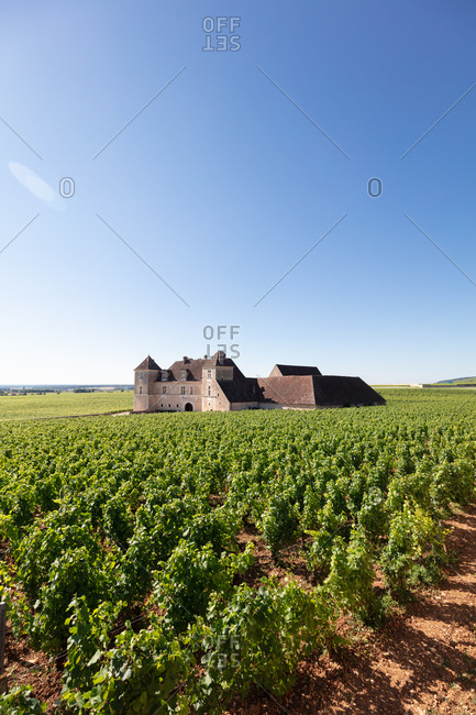 Burgundy, France - July 9, 2018: Clos Vougeot vineyard