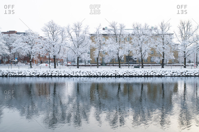 Frost-covered bare trees along a river in a city park