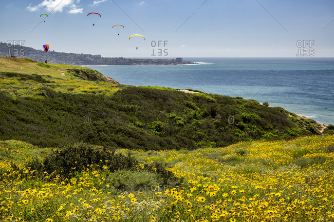 USA, California, La Jolla. Spring bloom at Torrey Pines Gliderport