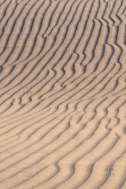 USA, California. Windblown sand dune
