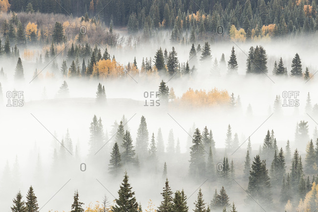 USA, Colorado, San Juan National Forest. Dawn ground fog covers mountain forest.
