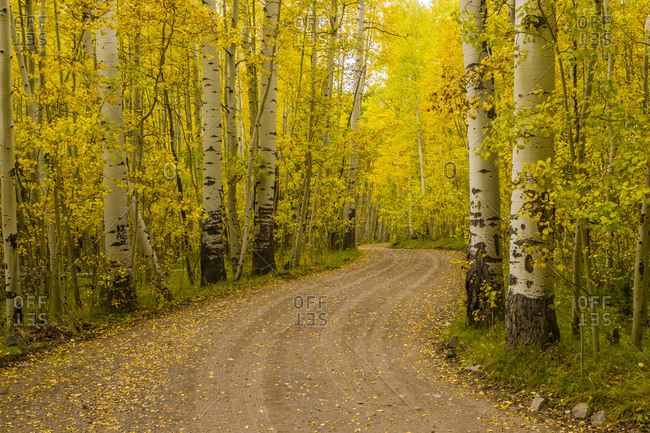 USA, Colorado, Gunnison National Forest. Road through forest.