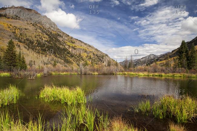 USA, Colorado, San Juan Mountains. Beaver pond in mountain landscape.