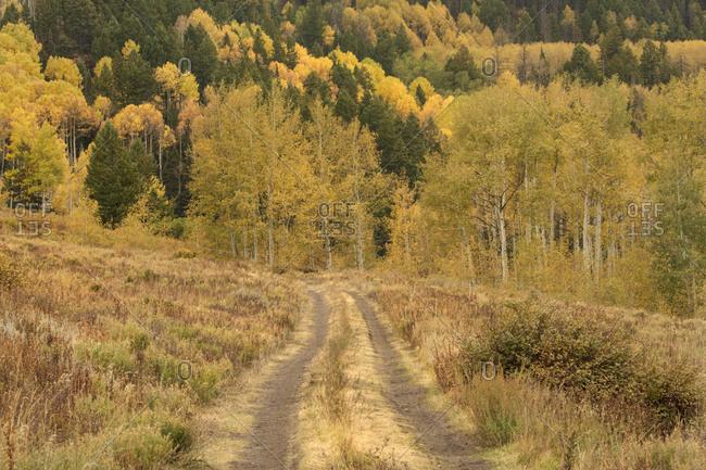 USA, Colorado, San Juan Mountains. Dirt road mountains.