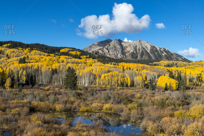 Beaver pond and Fall foliage and Aspen trees at their peak, near Crested Butte, Colorado