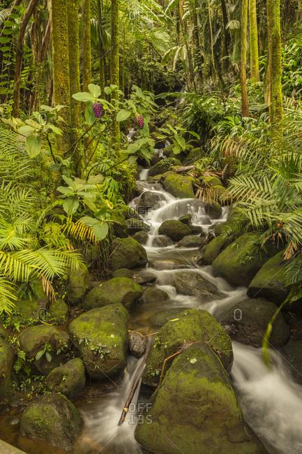 USA, Hawaii, Hawaii Tropical Botanical Garden. Tropical stream cascade over rocks.