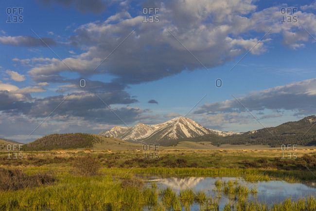 Sawtell Peak reflects in wetlands with herd of pronghorn antelope look on in the Red Rocks National Wildlife Refuge, Montana, USA