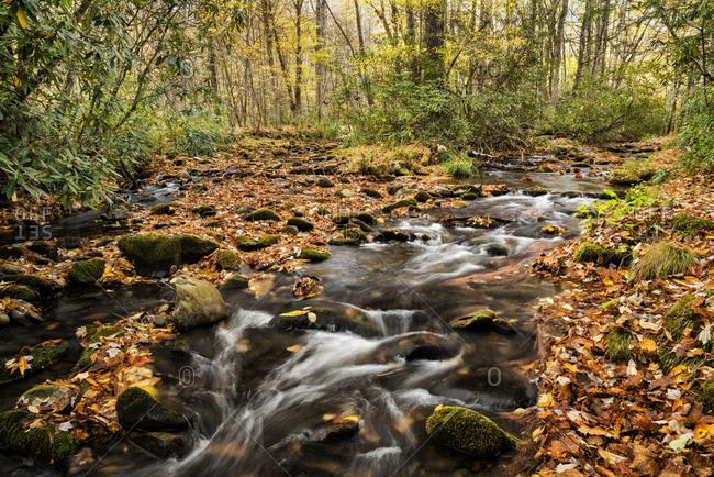 USA, North Carolina, Great Smoky Mountains National Park. Cataloochee Creek in Cataloochee Cove