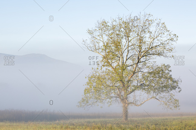USA, Tennessee. Great Smoky Mountains National Park, Clearing fog in Cades Cove