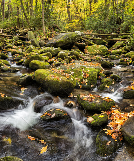 USA, Tennessee. Gatlinburg. Great Smoky Mountains National Park, Flowing creek along the Roaring Fork Motor Nature Trail