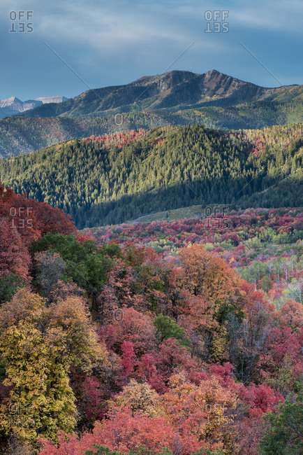 Brilliant Fall foliage near Midway and Heber Valley, Utah
