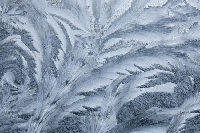 Ice design frozen on car window