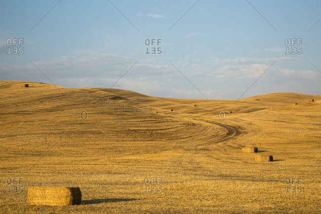 USA, Washington State, Palouse. Bales of straw in field.