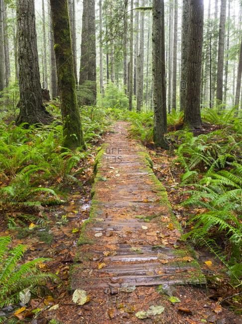 Washington State, Tiger Mountain State Forest, Old wood foot bridge