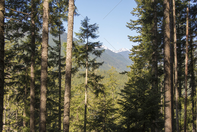 USA, Washington State, Olympic National Forest. View from Mt. Walker trail to Olympics