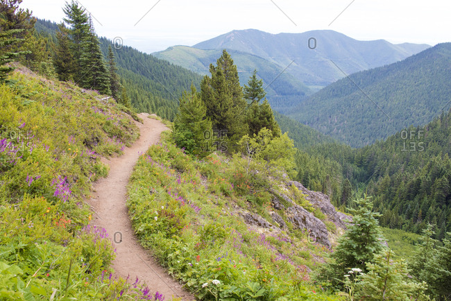 USA, Washington State. Wildflowers carpet hillsides along Mt. Townsend trail. Buckhorn Wilderness Olympic National Forest