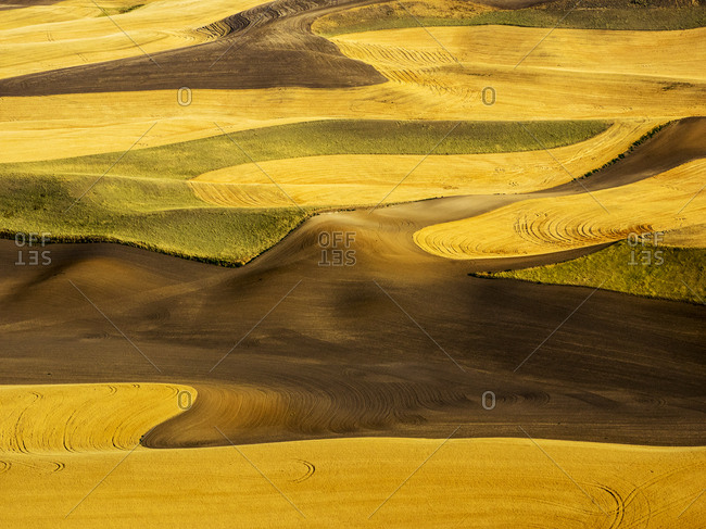 Aerial of harvest in the rolling hills of the Palouse