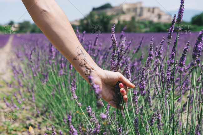 France- Provence- Grignan- Woman's arm with a world map temporary tatoo in a lavander field