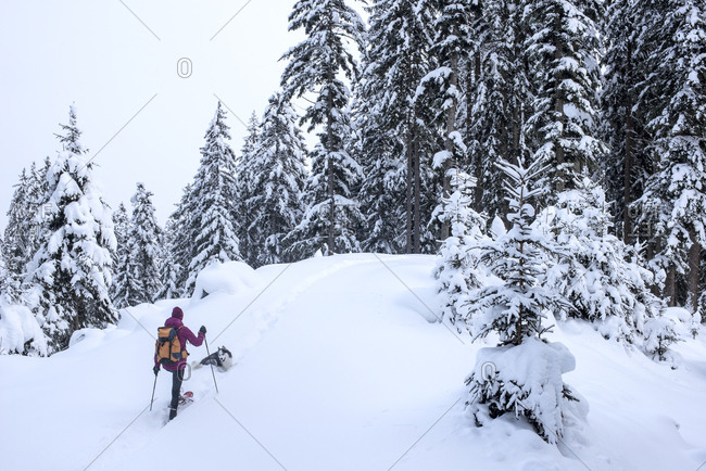 Austria- Altenmarkt-Zauchensee- young woman with dog on ski tour in winter forest