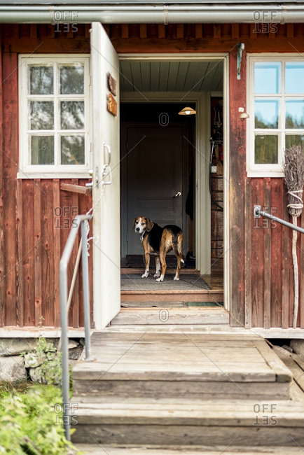 Dog standing at opened door in holiday home looking outside