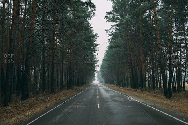 Empty country road through pine forest