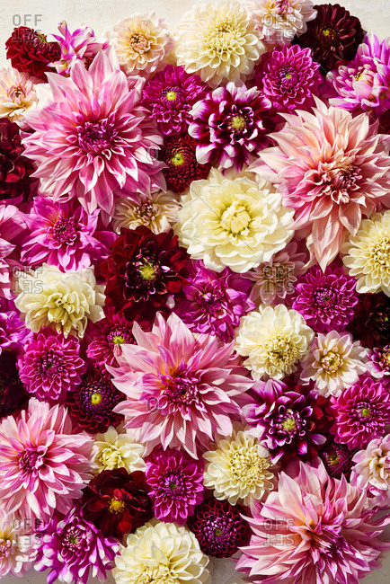 Pink dahlia arrangement