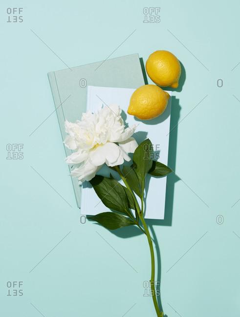 White peony with books and lemons on plain background