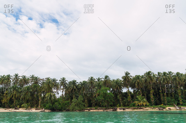 View of lush green palm trees on sandy beach of Bocas del Toro island and turquoise calm water, Pamana