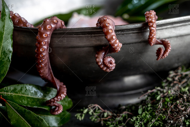 Fresh octopus tentacles with aromatic herbs lying in metal bowl in kitchen