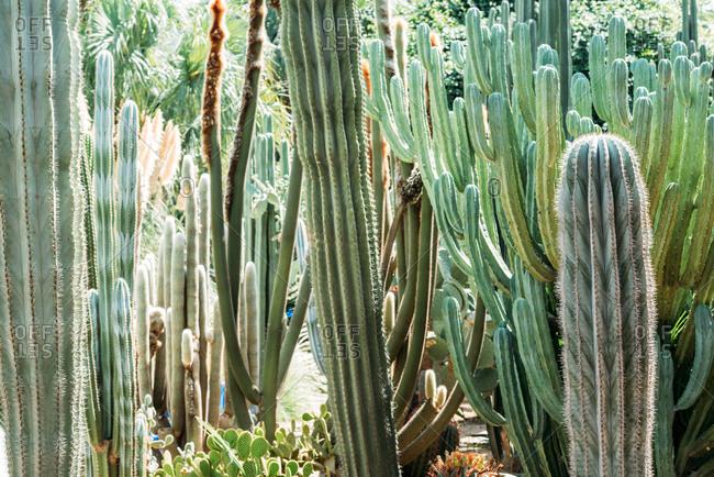 Cactus plant garden