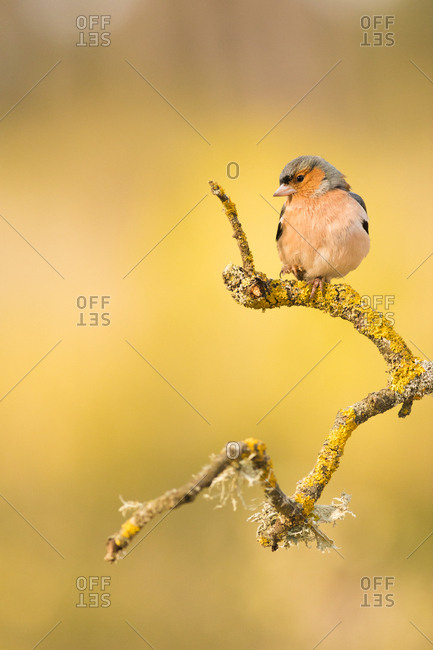 Small bird sitting on mossy twig