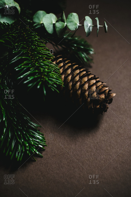 Closeup shot of small green twigs of conifer tree lying on brown background